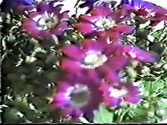 jpn vintage porn45
